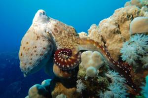 Faszinierende Unterwasserwelt Loreley